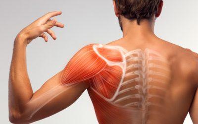 ¿Cuánto tiempo se necesita para recuperar el músculo después del ejercicio?